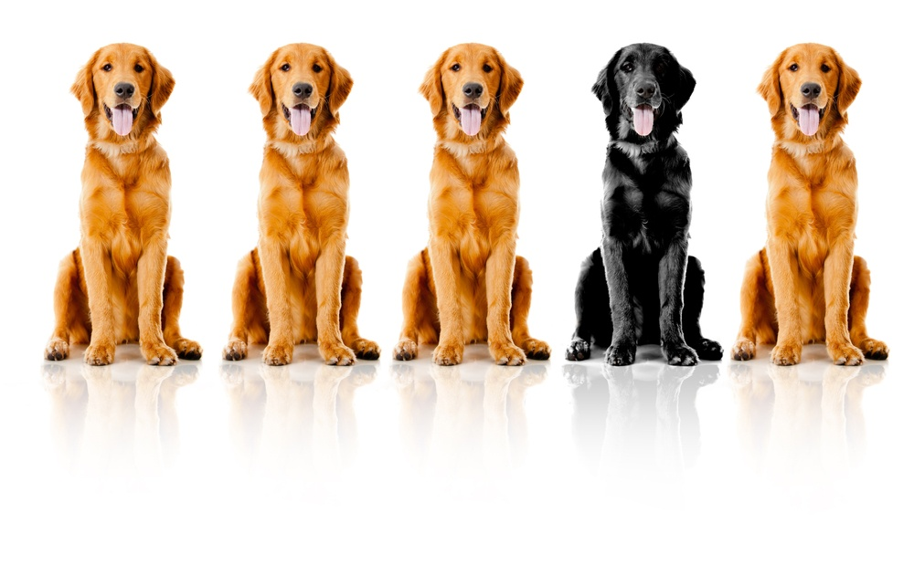 Beautiful dogs sitting down in a row - isolated over a white background